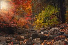Fairy's Hollow by Lisa Holloway on 500px
