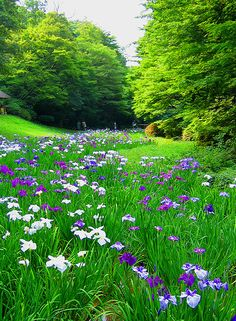Stream of iris