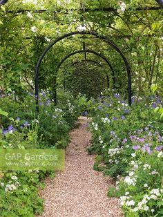 Image result for pergola with roses and clematis