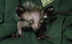 Os 12 animais mais esquisitos do mundo - Fotos - INFO