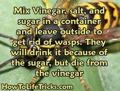 Get Rid Of Wasps, Bees And Wasps, Simple Life Hacks, Useful Life Hacks, Wasp Killer, Bee Killer, Wasp Traps, Wasp Trap Diy, Bee Traps