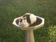 Occupied Bird Bath    http://fineartamerica.com/featured/occupied-bird-bath-deb-martin-webster.html