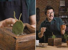 Entretien des cactus: comment garder son cactus en bonne santé, sans le noyer? Quelle quantité d'eau donner et à quelle fréquence? Quelle luminosité? Etc.