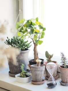 Mix of succulents Cacti And Succulents, Planting Succulents, Cactus Plants, Planting Flowers, Plants Are Friends, Indoor Plants, Indoor Gardening, House Plants, Flower Power