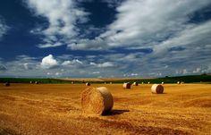 Immer früher,  ... findet auch im Saarland die Getreideernte statt. War es vor einigen Jahren noch der August, sind heute schon Ende Juli die meisten Felder abgeerntet. Auch bei Merzig. :-)