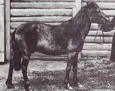 Extinct Tarpan Horse