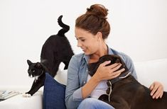 3 Tips for Being the Best Pet Parent in Town Pet Sitters International, Living With Cats, Dog Smells, Like A Cat, Wild Dogs, Stock Foto, Mans Best Friend, How To Introduce Yourself, Cats And Kittens
