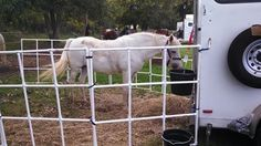 PVC Portable Horse Corral Panels my husband and I made.