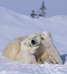 10 Firsts for Cute Cubs on International Polar Bear Day
