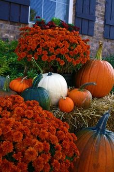 Pumpkins and mums <3