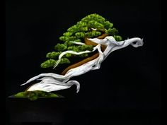 Windswept Bonsai - photo by Jake Sweet Indoor Bonsai, Bonsai Plants, Bonsai Garden, Bonsai Trees, Succulents Garden, Air Plants, Cactus Plants, Unique Trees, Small Trees