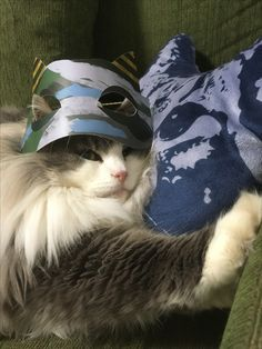 鬼のお面をかぶったハイネ,オクリモ, 猫,ネコ,cat,Norwegian Forest Cat