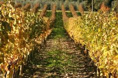 vignette design: A Fall Day in the Tuscan Countryside