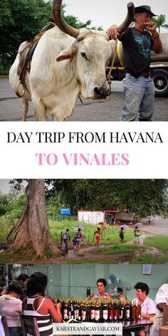 Day Trip From Havana to Vinales & Pinar del Rio
