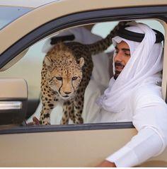DesertRose:::so cute leopard