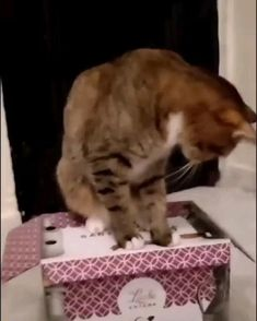 Cute Baby Cats, Funny Cute Cats, Cute Little Animals, Cute Cats And Kittens, Cute Funny Animals, Kittens Cutest, Cute Animal Videos, Funny Animal Pictures, Gato Gif