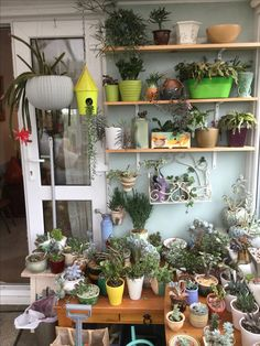 10 off succulents coupon code plant10 valid through august 15 success quotes indoor gardening air plants succulents cactus bonsai sassy planters pots fandeluxe Gallery