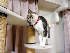 一日たった猫らの様子  うにオフィシャルブログ「うにの秘密基地」Powered by Ameba