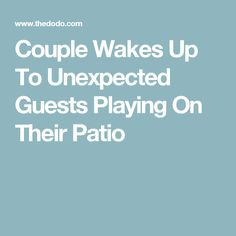 Couple Wakes Up To Unexpected Guests Playing On Their Patio