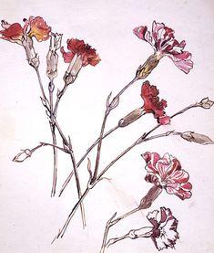 beatrix potter drawings | Beatrix Potter Art, Prints, Paintings, Posters