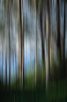 Sonoma   www.williamsstudio.com