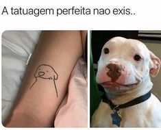Memes Status, Memes Humor, Frases Humor, Sao Memes, Baby Animals, Cute Animals, Lol League Of Legends, Just Smile, Stupid Funny Memes