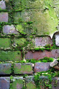 texture- because it shows the brick growing moss Natural Forms, Natural Texture, Foto Macro, Peeling Paint, Texture Art, Green Texture, Shade Garden, Wabi Sabi, Shades Of Green