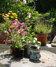 Plants for the terrace - beautify the space
