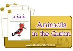 Studio Arabiya - Animals in the Qur'an