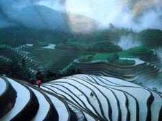 Les rizières en terrasse de Longji