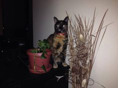 ***LOST CAT***LEDYARD, CT*** *** Lakeside Condo/Highlands Lake/Shewville area*** ***CONTACT*** 860-710-8047 Shared June 5, 2014 LOST LEDYARD Lakeside Condo/Highlands Lake/Shewville area  Gracie went missing 2 days ago when she was chased up a tree by a neighbor's dog. Has not been seen since. Please contact Amanda if you have any info or sightings 860-710-8047