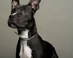 Portraits of Dogs Least Likely to Be Adopted - by New York-based photographer LaNola Stone