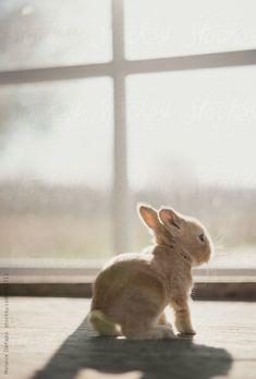 Monica Francis Baby rabbit = kitten or kit Cute Baby Bunnies, Funny Bunnies, Cute Little Baby, Cute Little Animals, Cute Babies, Fluffy Bunny, Pet Rabbit, Love Pet, My Animal