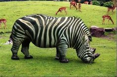 Infidelidad en el zoologico