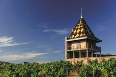 Burgundy's wine board, the BIVB, has approved its ambitious Cité des Vins de Bourgogne, a new wine tourism, culture and education centre that will be built on three sites in Beaune, Chablis and in the Mâcon.