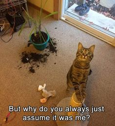 funny-animal-pictures-3