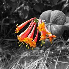 Mooie bloem in @buitengewoon_gld #tiel #bloem #flower #nature #natuur