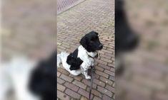 Hond zoekt zijn/haar baasje in Medemblik omgeving Bangert