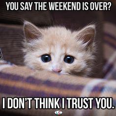 Don't believe what you hear.  You can't trust everyone! #Joke #Meme #Weekend #Monday
