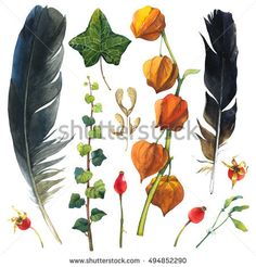 Watercolor illustration with branches, leaves and berries. Set of winter and autumn forest plants and feathers. Collection of herbarium garden. Willow, viburnum, rosehips.