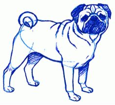 Exam Guide Online - How to Draw a Pug.
