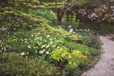 The pretty woodlands in Wendy Perry's Truro garden are lit up in spring with beautiful bulbs and elegant trees and shrubs Woodland Garden, Peaceful Places, Trees And Shrubs, Spring Garden, Spring Time, Bulb, Truro Cornwall, Magical Gardens, Plants