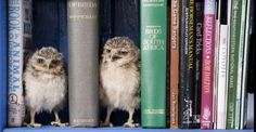 tiny little owlies :)