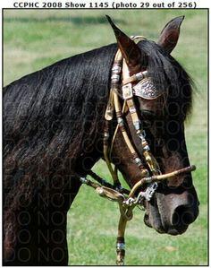 I ♥ peruvian paso horses!!