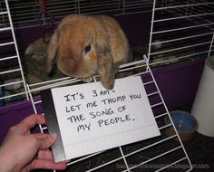 Bunny shaming - It's 3 AM; let me thump you the song of my people. This is Simon, from Bunnies And Sunshine. Funny Bunnies, Baby Bunnies, Cute Bunny, Pet Bunny Rabbits, Cute Baby Animals, Funny Animals, Somebunny Loves You, Rabbit Pictures, Bunny Care