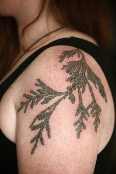 cedar sprig by alice carrier at wonderland tattoo in portland, oregon  http://alicecarrier.tumblr.com