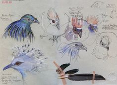 Birds in the Wallace Aviary. Drawing in Bristol Zoo 2011 UK Artist: Duncan Cameron Sketchbook Pages, Sketchbook Ideas, Duncan Cameron, Bristol Zoo, Bird Sketch, Children Images, Art Journal Inspiration, Animal Kingdom, Rooster