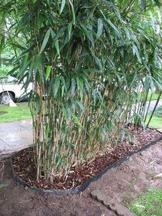 4 Mighty Tips: Garden Ideas For Small Spaces Children backyard garden design tutorials.Backyard Garden For Beginners english garden ideas trees. Small Backyard Gardens, Backyard Landscaping, Outdoor Gardens, Big Garden, Garden Fun, Large Backyard, Balcony Garden, Bamboo Hedge, Bamboo Garden