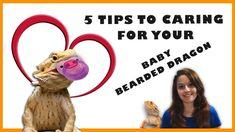 Baby Bearded Dragon Care – 5 Tips To Caring For Your Baby Bearded Dragon – Business Loans and Ideas Eastern Bearded Dragon, Bearded Dragon Diet, Bearded Dragon Lighting, Supernanny, Pet Turtle, Pet Dragon, Baby Care Tips, Stressed Out, Care About You