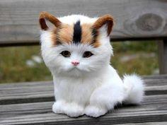 Cute pictures of cats – arrête de me regarder - je sais que je suis beau, mignon,adorable, etc....